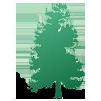 Howard B. Toms, Inc. Tree Surgery & Removal